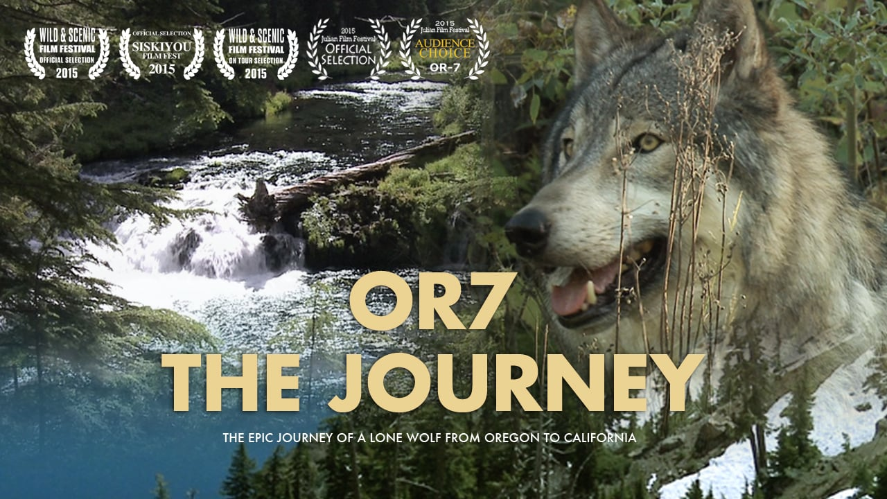 OR7 The Journey